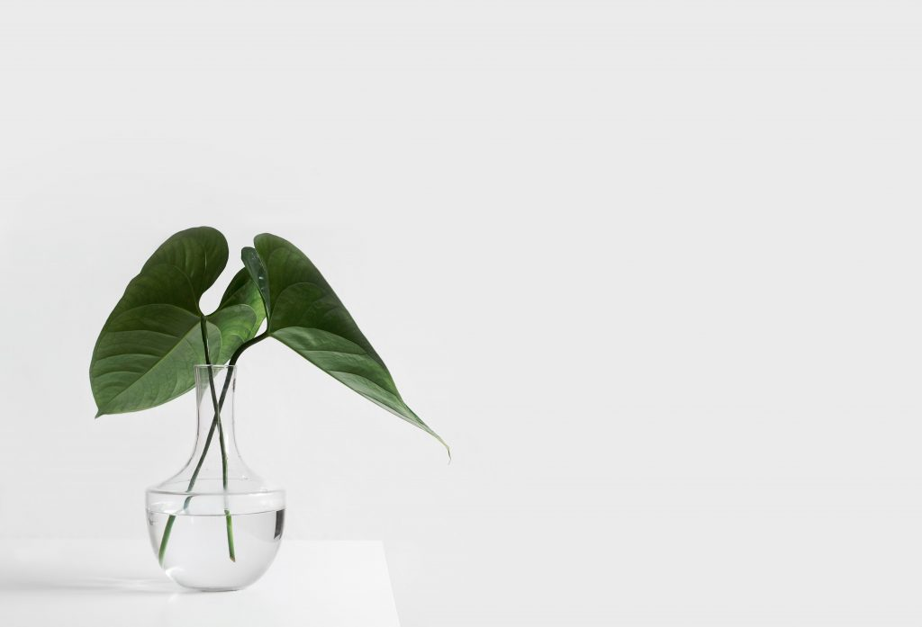 green plant on gals bowl on white background
